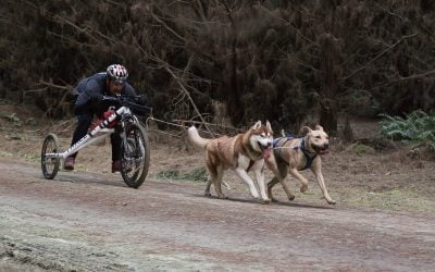 Training in Waitarere Forest and Autumn Burn Sled Dog Derby