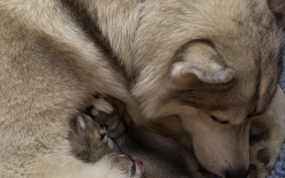 Introducing Spirit and the Birth of Her Pups