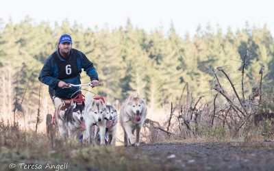 Central Territories Siberian Husky Club – Siberian Challenge August 2017