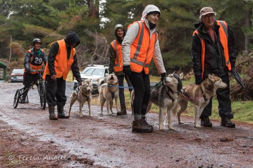 multi dog rig start