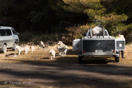Great Northern Classic II dogs and trailer