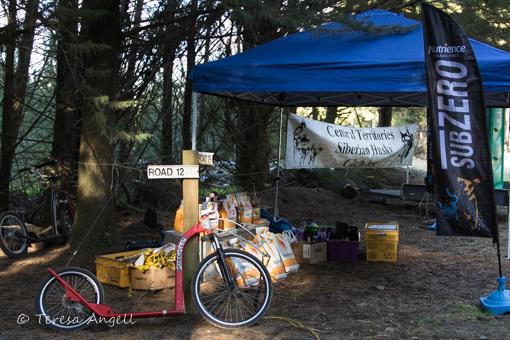 Sled Dog Derby set up