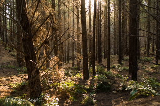 Sled Dog Derby forest sunlight